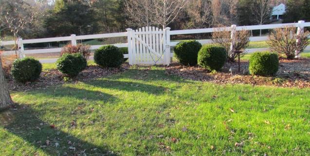 Boxwoods: A Virginia Staple