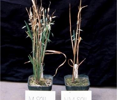 Mycorrhizae Part II