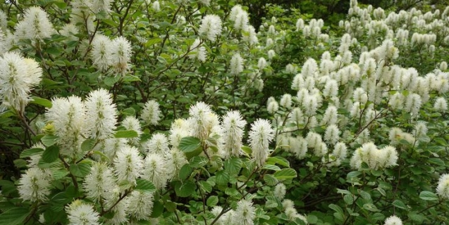 Local Sources for Native Plants