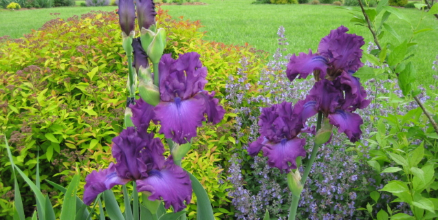 Tasks & Tips in the Ornamental Garden