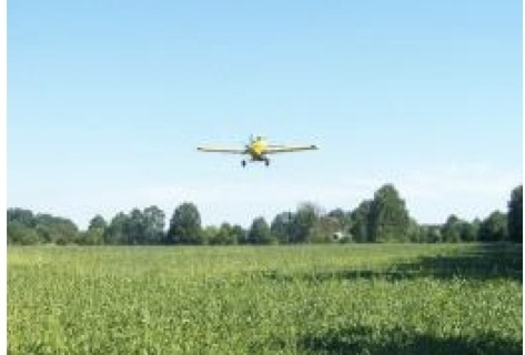 Forage Radishes — A hard-working cover crop