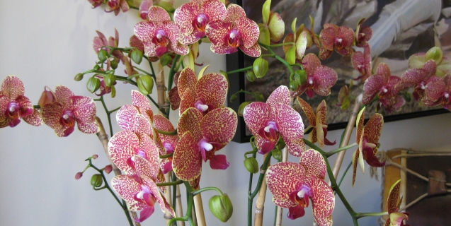 The Mystique of Tropical Orchids