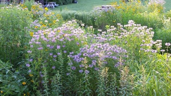Meadow Gardening