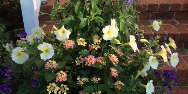 The Ornamental Garden in July