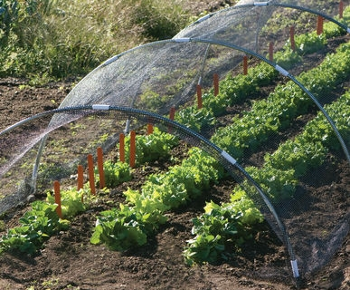 The Vegetable Garden To-Do List
