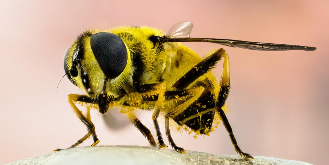 Good Bugs — Bad Bugs   Piedmont Master Gardeners