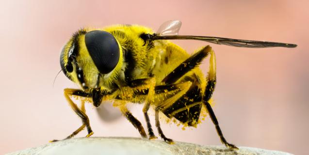 Good Bugs — Bad Bugs