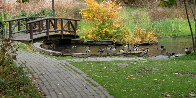 The Ornamental Garden in November