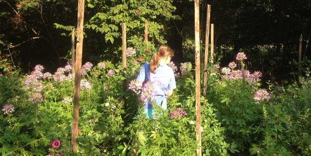 July Tasks and Tips in the Ornamental Garden