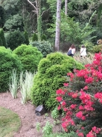 Abeliatough But Beautiful Piedmont Master Gardeners
