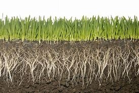 The Soil Food Web: Nature's Way to Build Healthy Soils