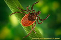 Managing the Tick Problem
