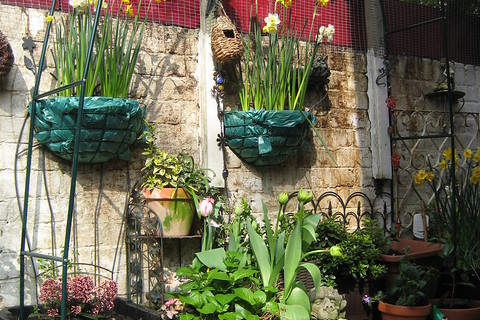 Container Gardening, Part I