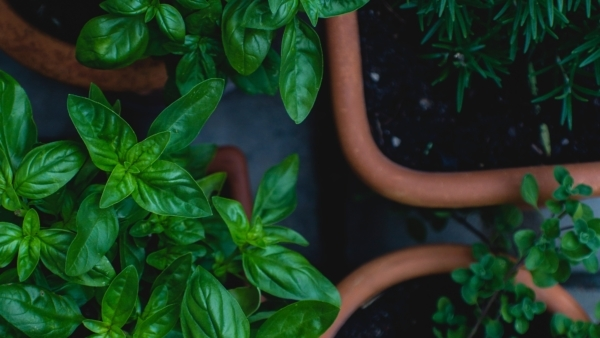 Container Gardening II:     What to Grow & How