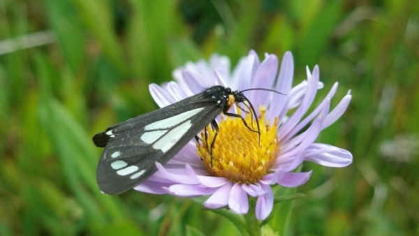 Pollination: Flowering Plants, Pollinators, and the Wonder of it All