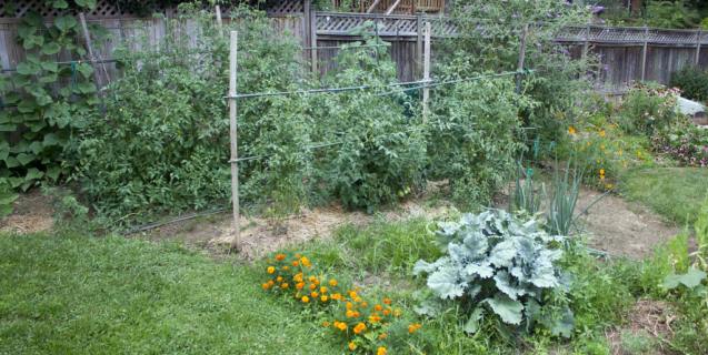 In the Vegetable Garden: July
