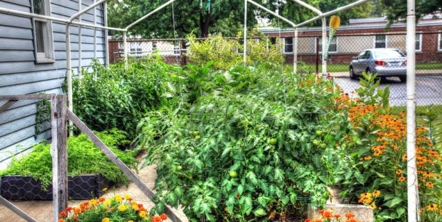 In the Vegetable Garden- August
