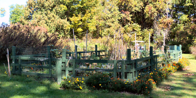 October in the Vegetable Garden
