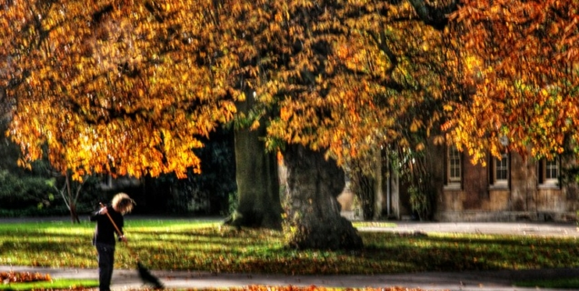 November Tasks in the Ornamental Garden