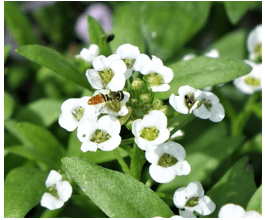 Natural Pest Control:  Attracting Beneficial Insects