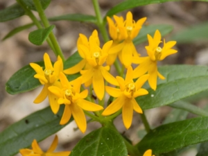 Native Species Or Cultivars Of Native Plants Does It Matter Piedmont Master Gardeners