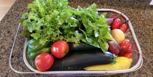 Guidelines for Harvesting Vegetables