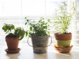 Extend the joys of the growing season, add flavor to your food, and breathe in the fragrances of fresh herbs.