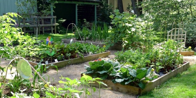 Starting a Home Vegetable Garden