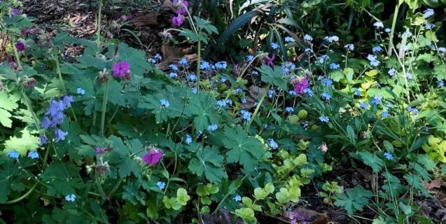 April Tasks in the Ornamental Garden