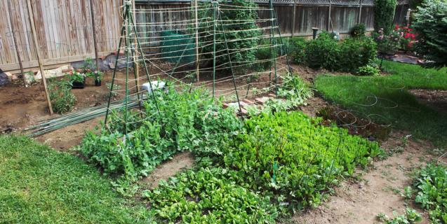 The Edible Garden in May