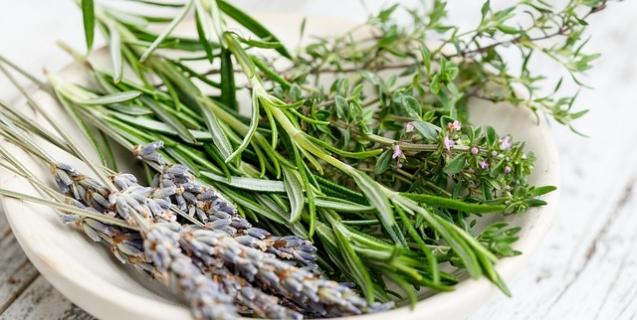 Using Culinary Herbs