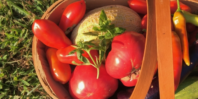 Salsa—Part One, Part Two