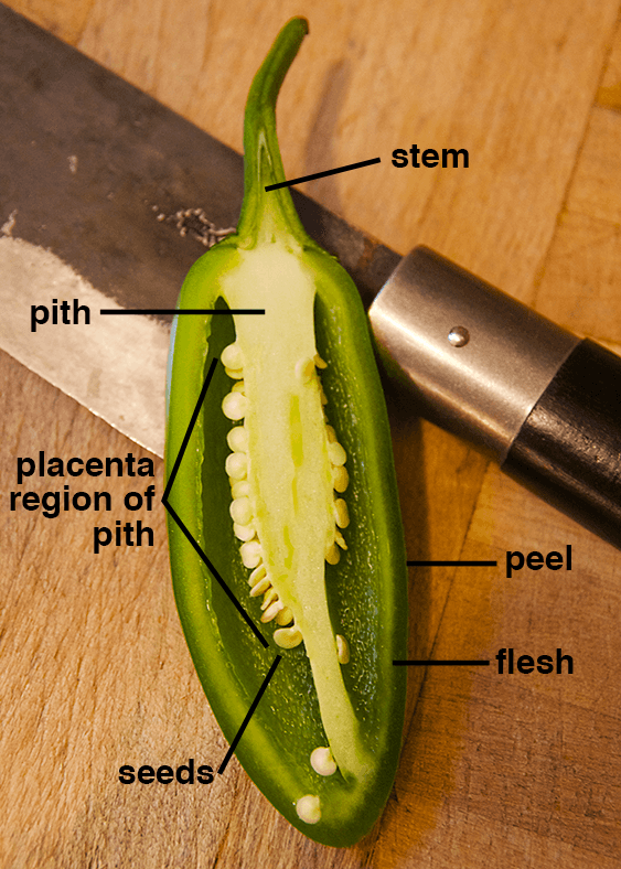 """a cut-in-half jalapeño pepper with its """"anatomy"""" labeled © 2021 S. Christopher Stroupe"""