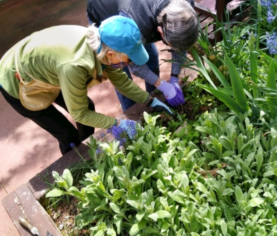 Master Gardeners coach as they work.