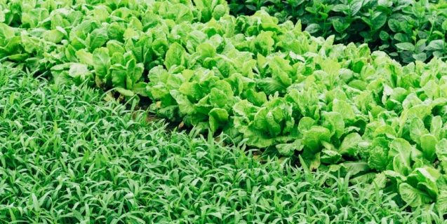 The Nutritional Value of Leafy Green Vegetables