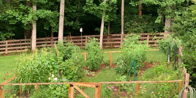 August in the Edible Garden