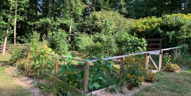 September Tasks in the Edible Garden